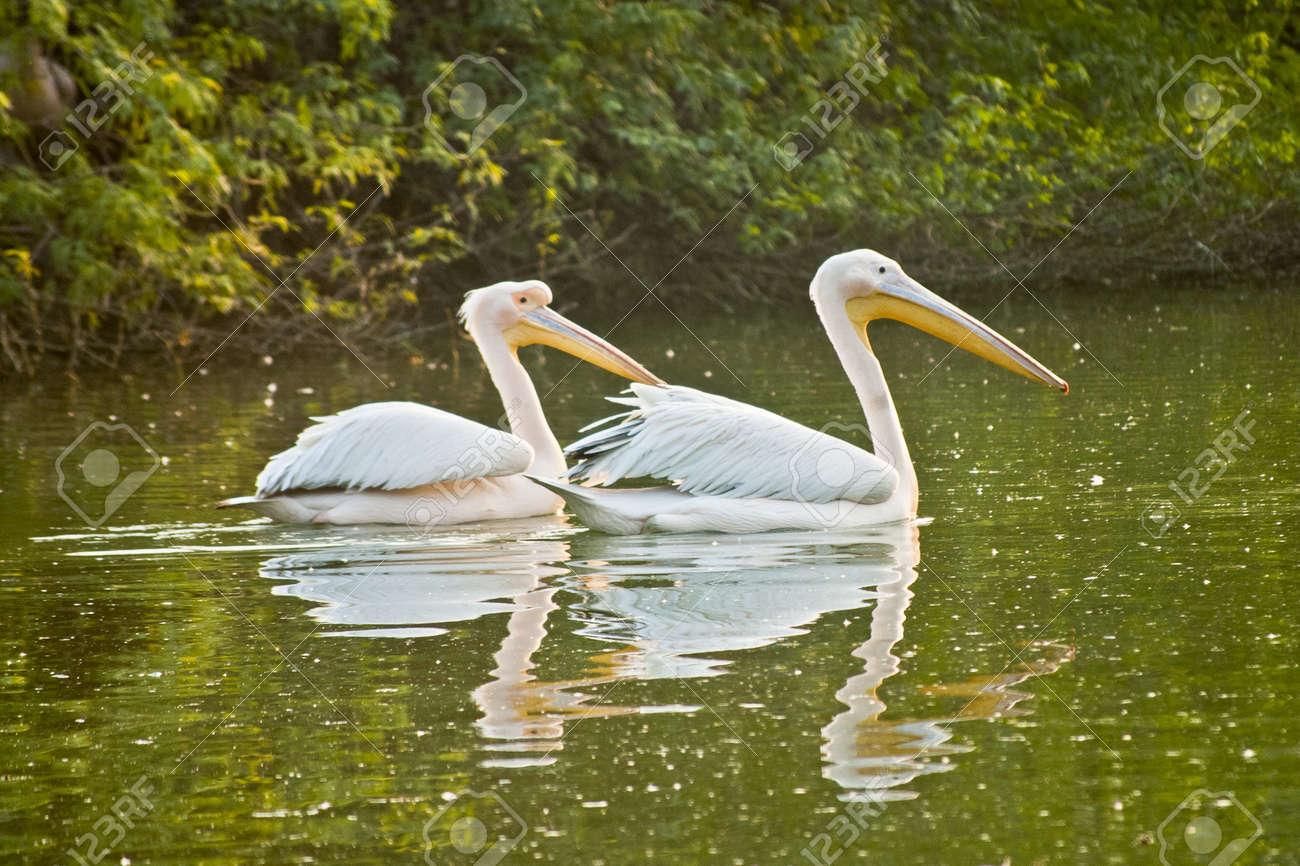 Birds Stock Photo - 9190153