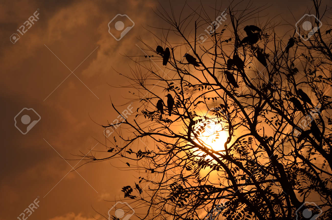 Birds sitting on tree after long day with sunset and colorful sky in the backdrop Stock Photo - 25861713