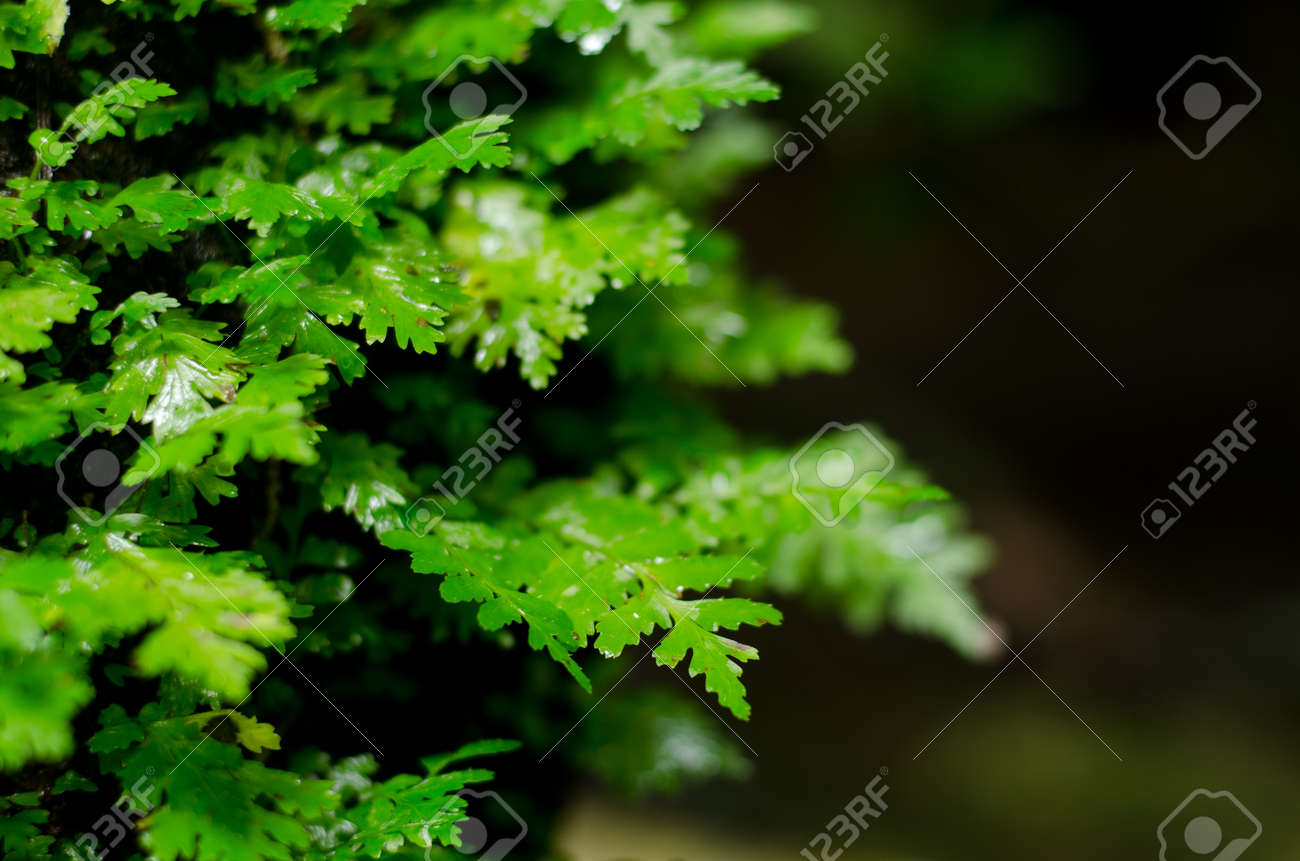 Plant environment of waterfall Stock Photo - 15528092