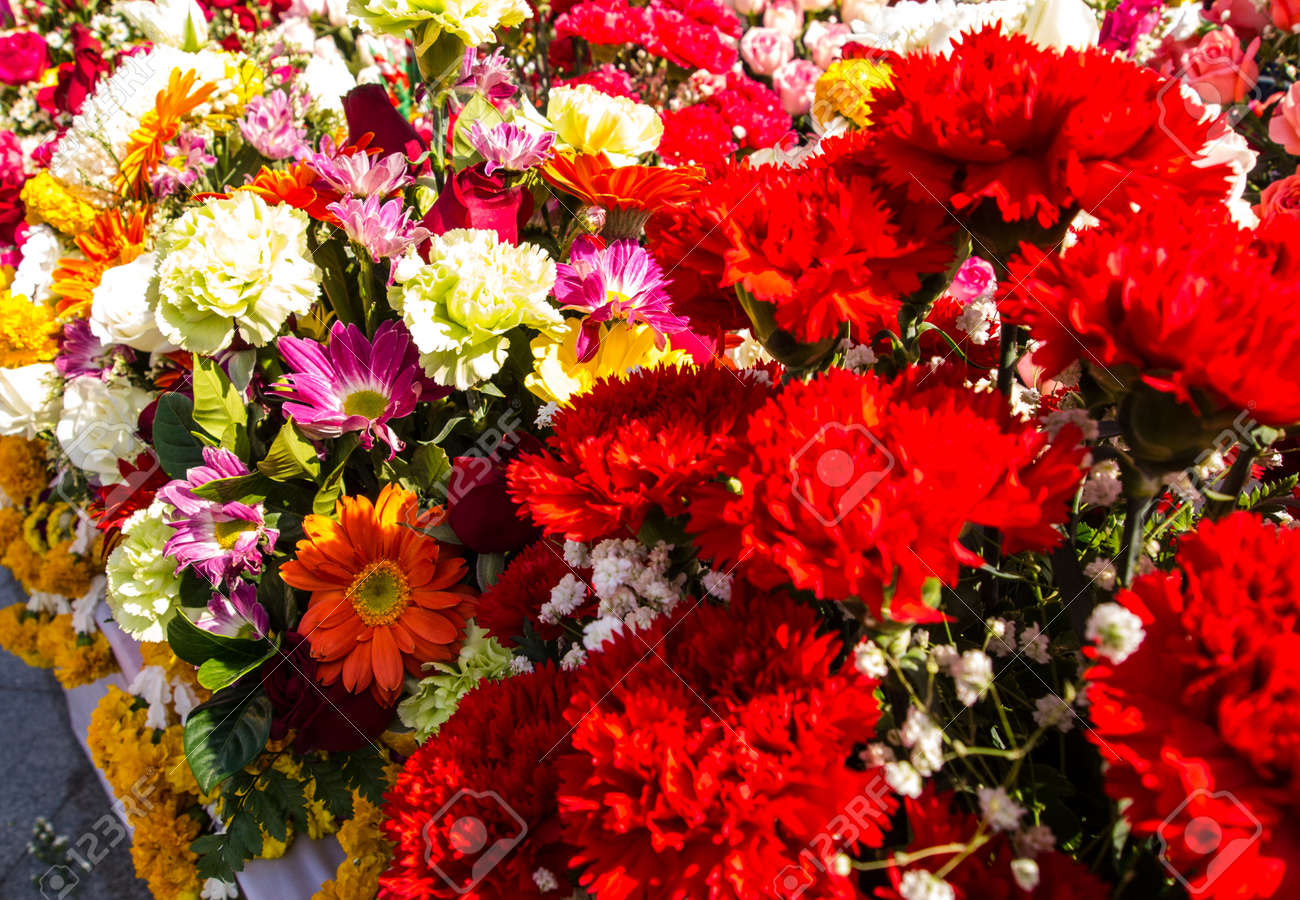 Beautiful Red Flowers With Many Color Combinations Stock Photo