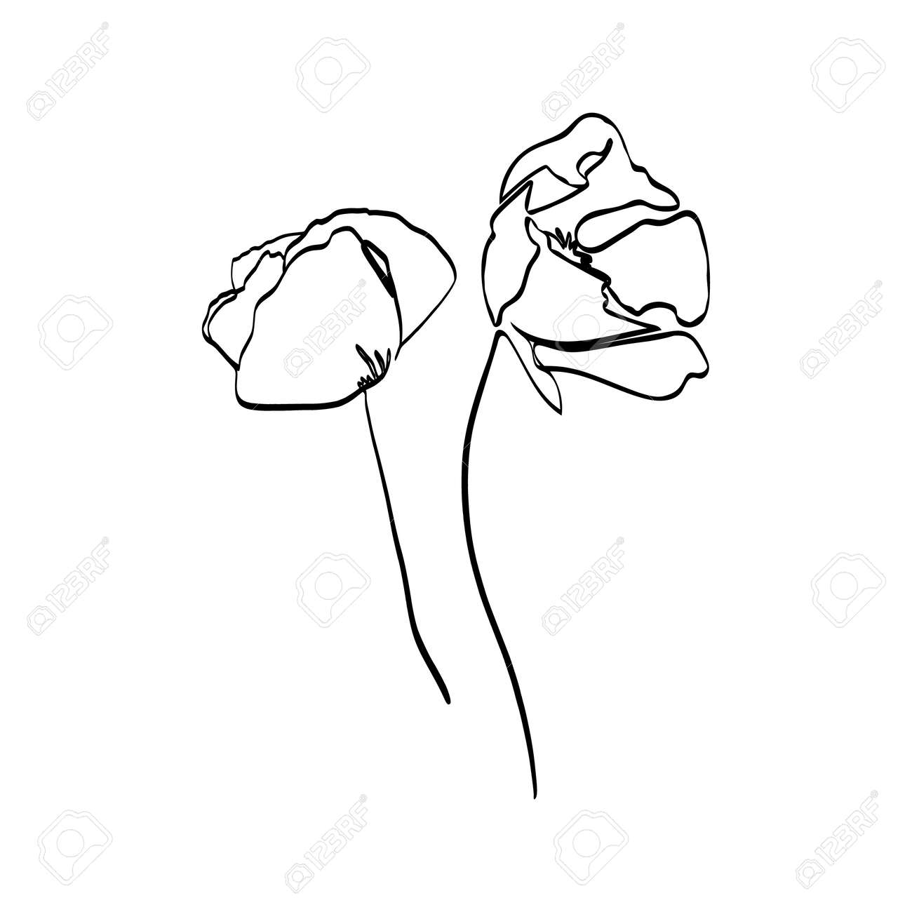 Poppy Flower Continuous Line Drawing Vector Abstract Plant In Royalty Free Cliparts Vectors And Stock Illustration Image 129788180