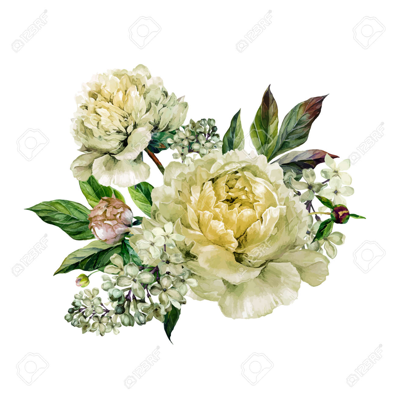 Vector - Vintage floral bouquet of white peonies and white lilac. Hand  drawn watercolor botanical illustration. Summer floral peonies greeting card