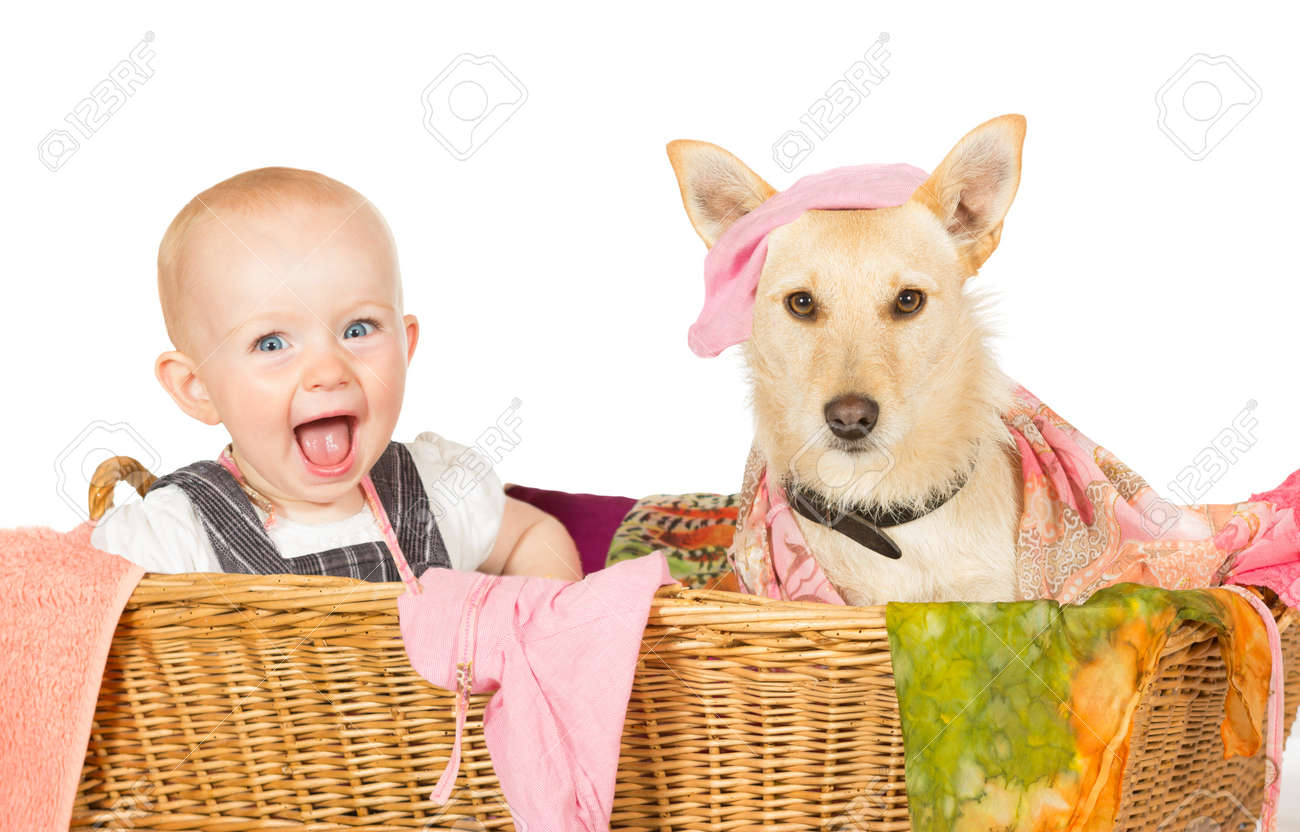 Mischievous happy young baby and dog with a guilty expression sitting in the laundry basket covered in washing Stock Photo - 15074155