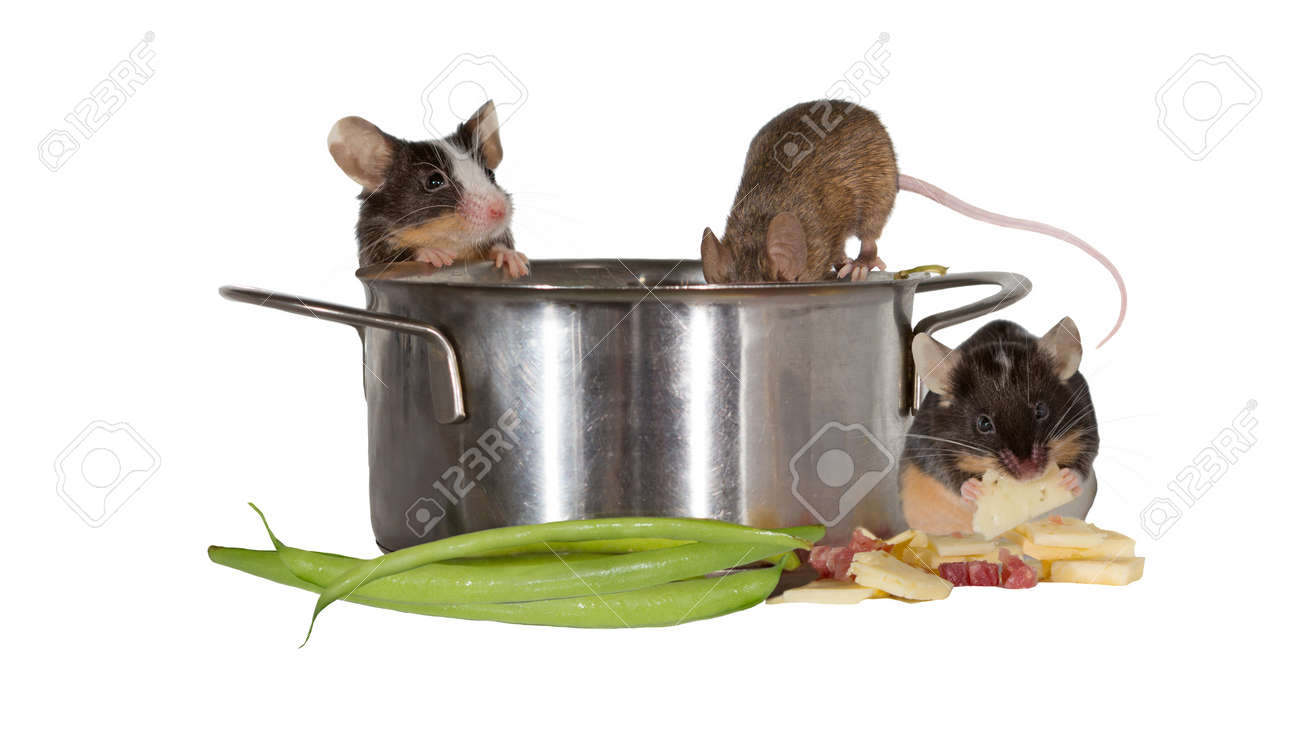 Three mice investigating the kitchen clambering into a stainless..