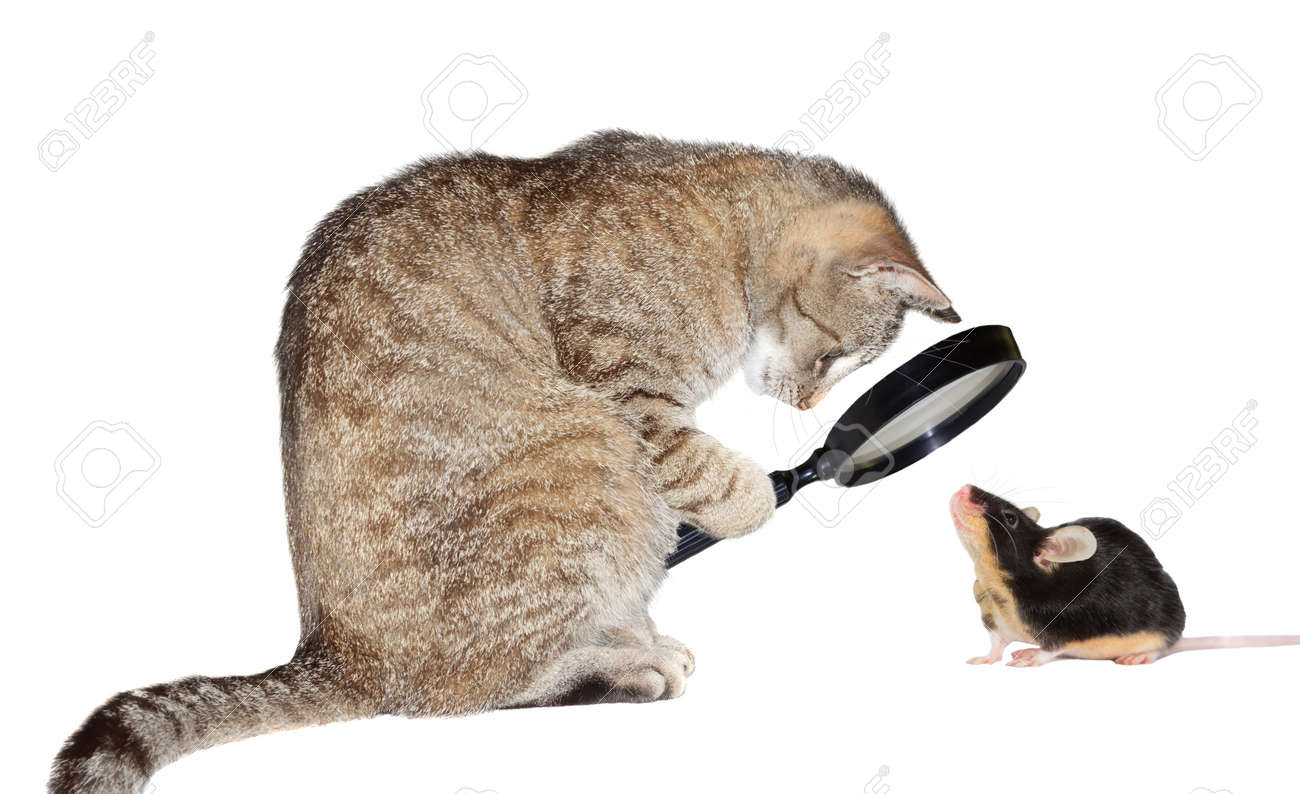 Humorous conceptual image of a nearsighted cat with myopia peering at a little mouse through a magnifying glass isolated on white - 15822340