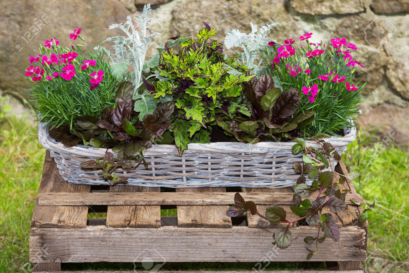 Potted Garden Plants Potted garden plants like carnation and painted nettle in a basket potted garden plants like carnation and painted nettle in a basket in front of a stone workwithnaturefo
