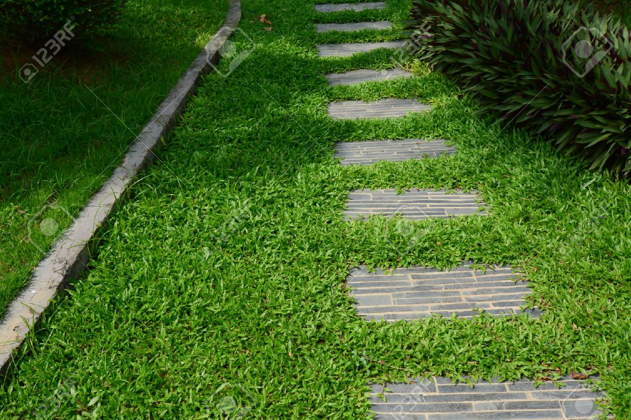 Path In The Garden, Stepping Stones In Grass Lawn. Stock Photo, Picture And Royalty Free Image. Image 79075952.