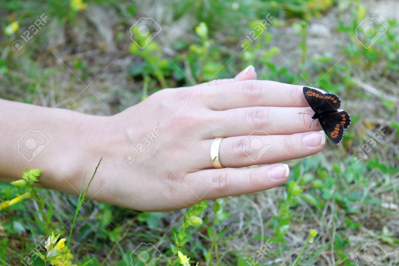 Small butterfly sitting on a female hand  The insect has black
