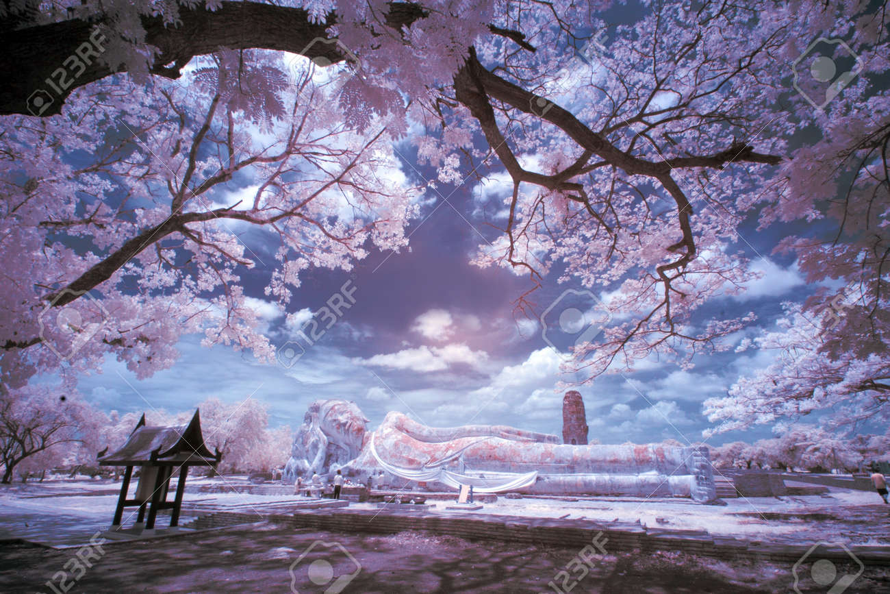 Infrared Landscape Stock Photo - 13897731