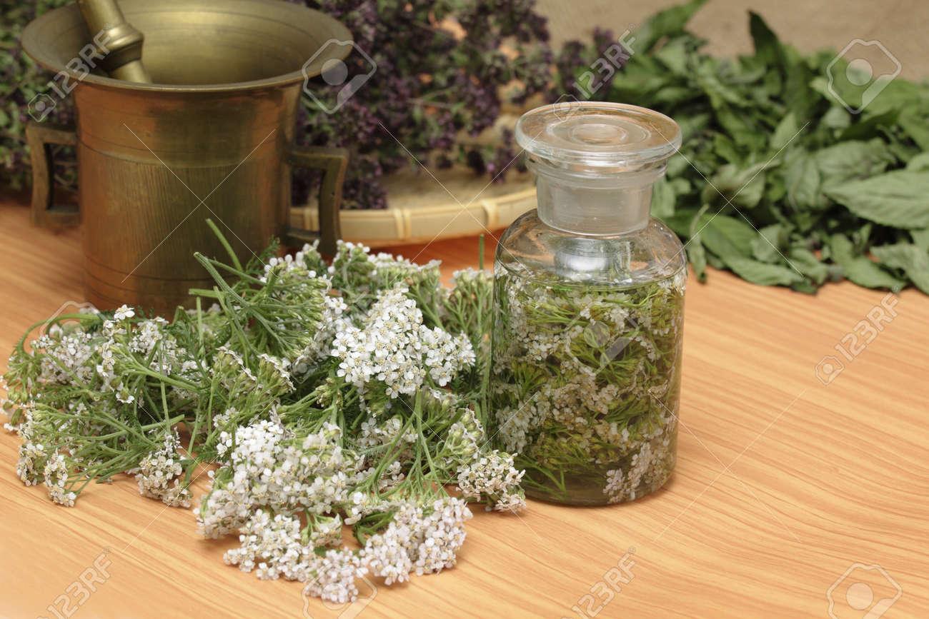 Medicinal herbs - fresh achillea millefolium, dried wild thyme and  mint Stock Photo - 10255456