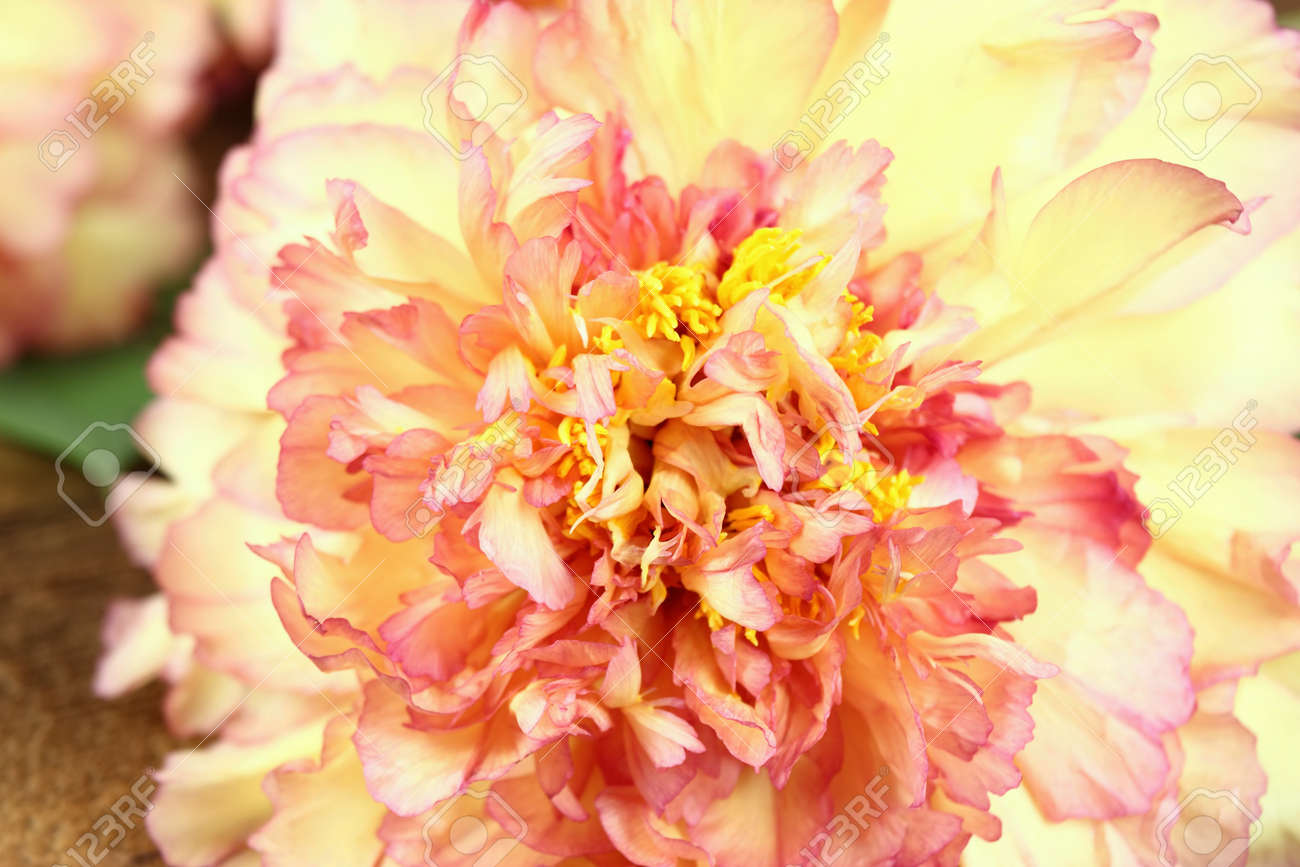 Peony Background Mountain Tree Peony Chinese Tree Peony Yellow