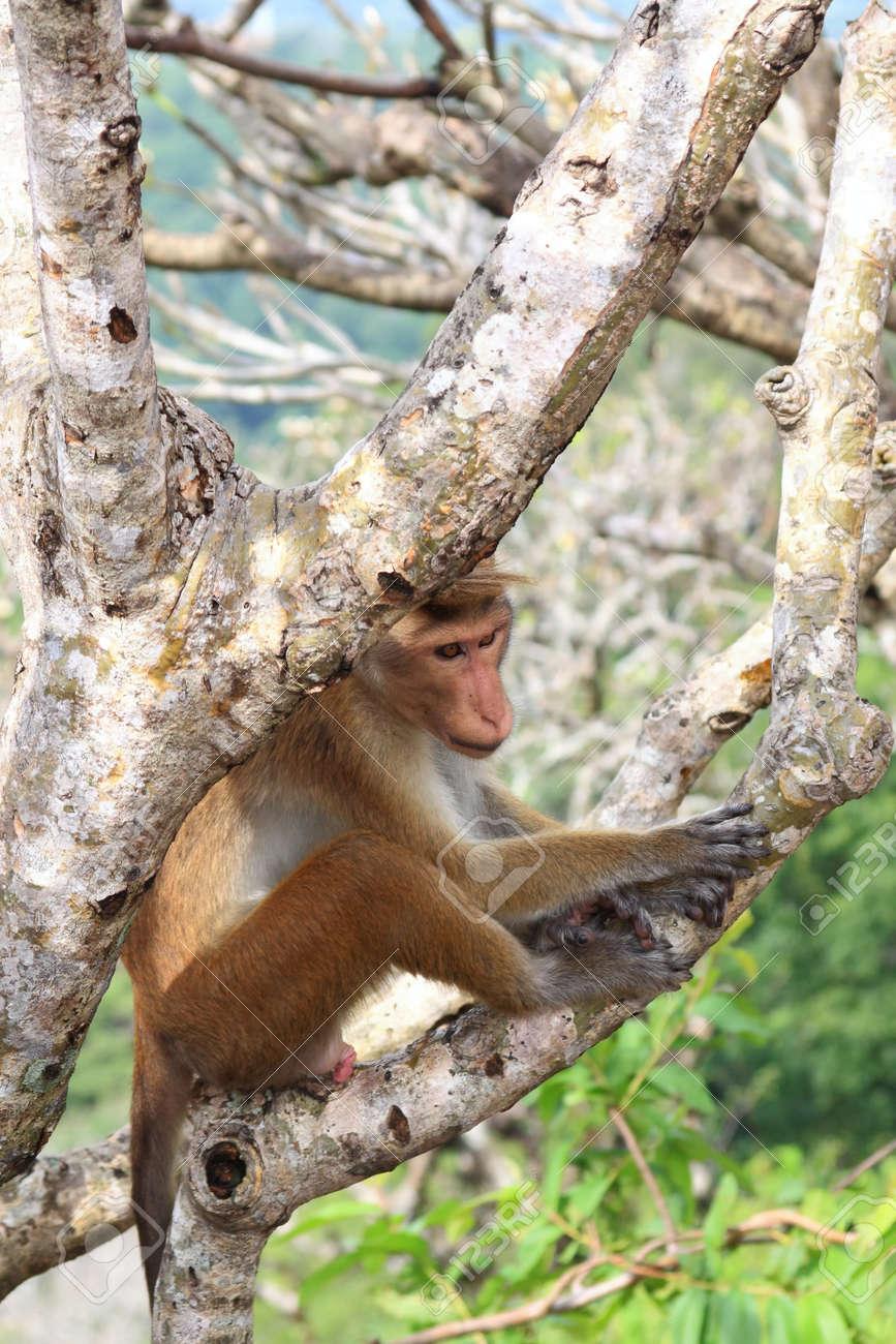 macaco con pene
