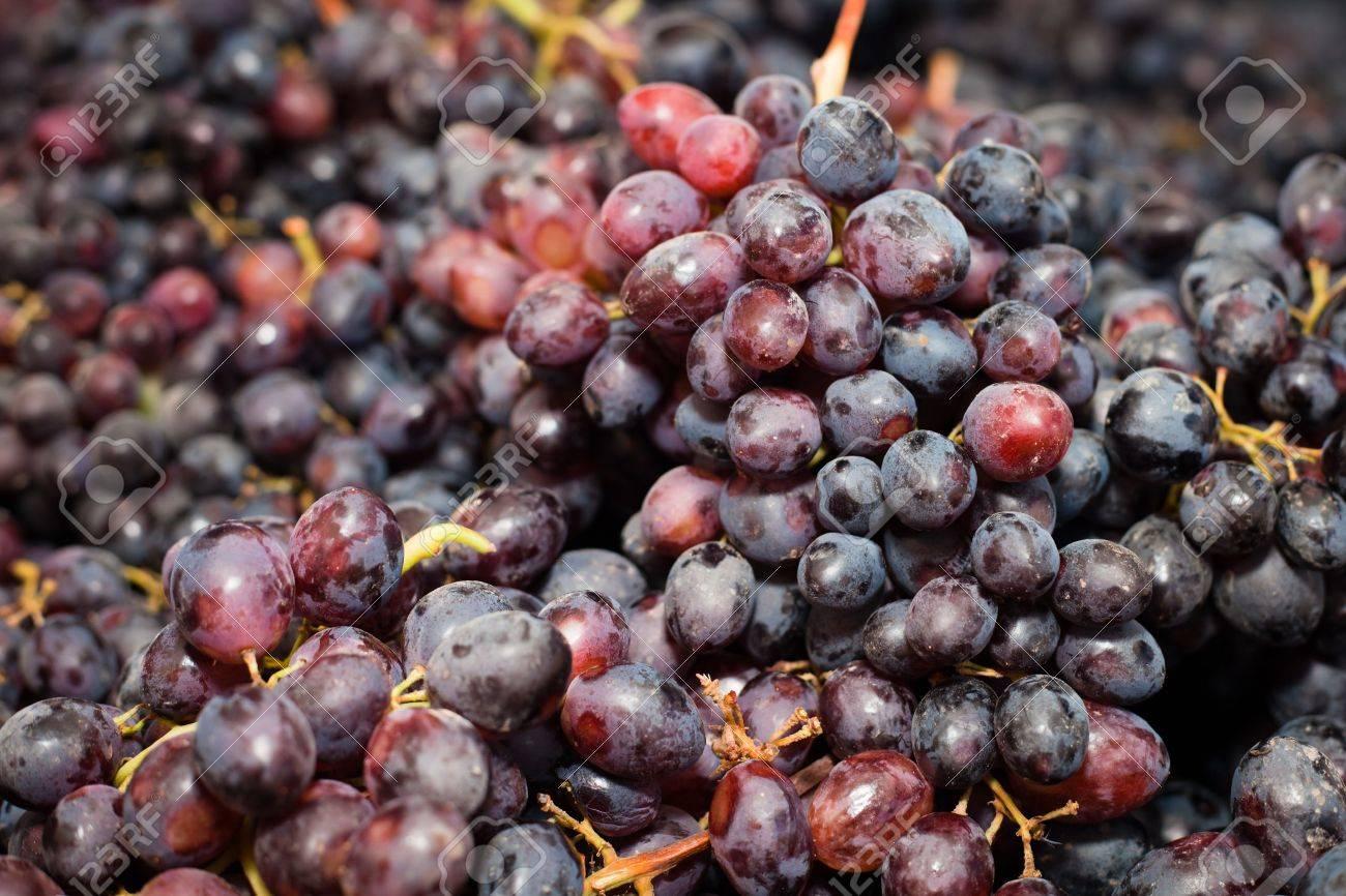 Un gros plan un tas de lignes de raisins. Banque d'images - 11285928
