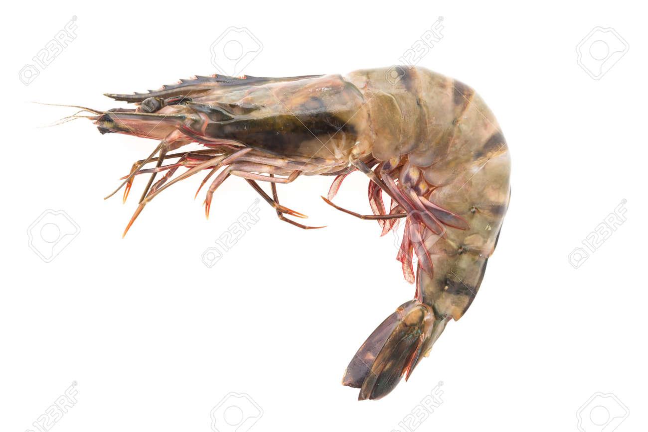 Raw Tiger Prawn Shrimp Isolated On White Background Stock Photo