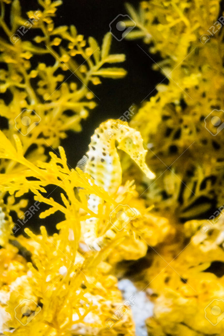 Seahorse in underwater with corl