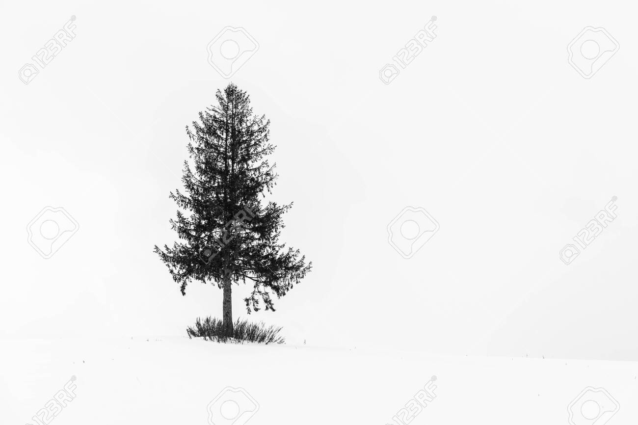 Lonely Christmas.Beautiful Outdoor Landscape With Lonely Christmas Tree In Snow