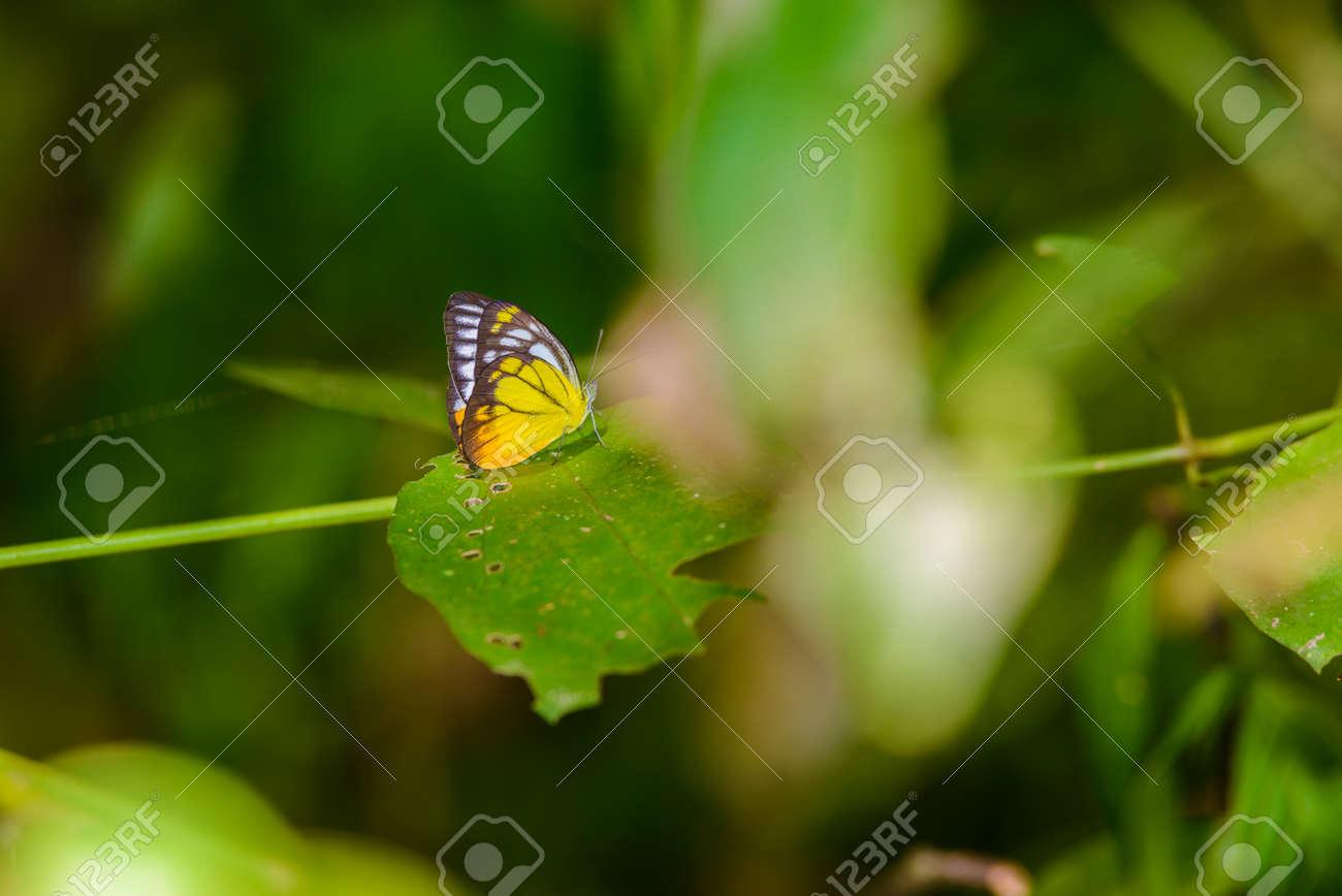 Viele Pieridae Schmetterlinge Sammeln Wasser Auf Dem Boden