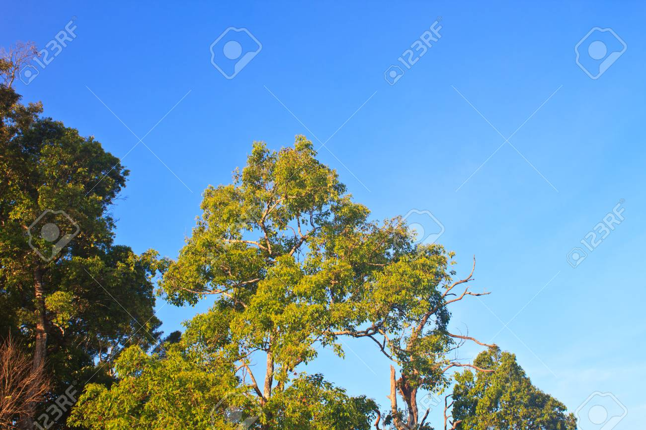 green forest and blue sky background Stock Photo - 25695918