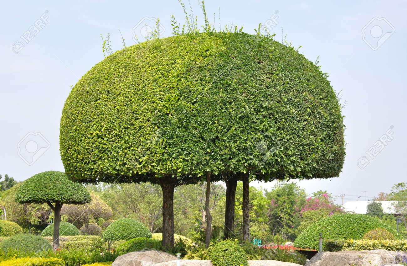 Delightful Trimmed Bush In Garden Stock Photo   11221082