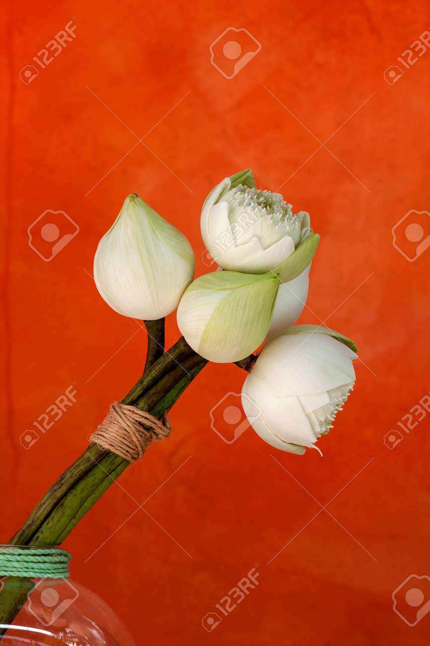 Beautiful white lotus flower arrangement with space on orange beautiful white lotus flower arrangement with space on orange background stock photo 61456694 izmirmasajfo