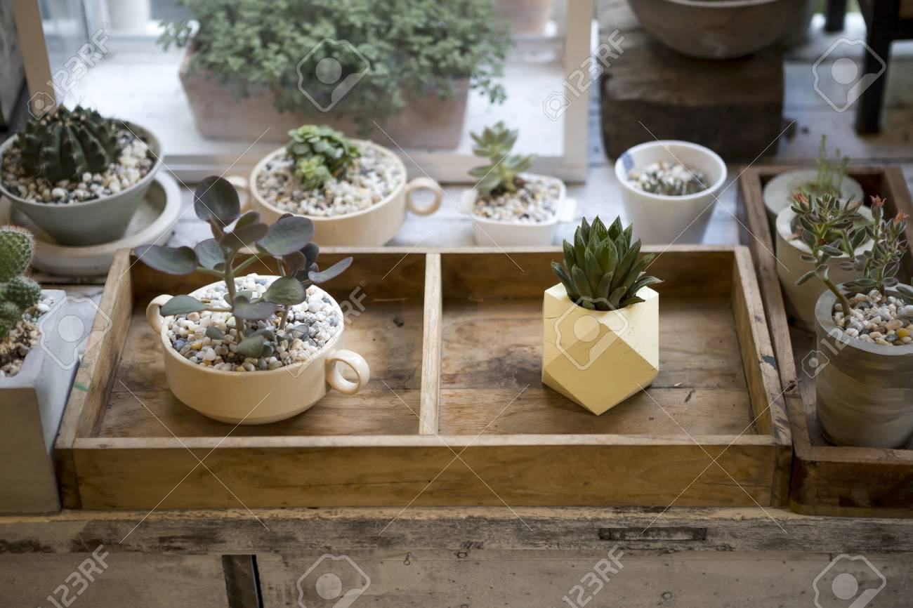 Design Plant Pot In Wooden Box, House Decoration, Small Indoor ...