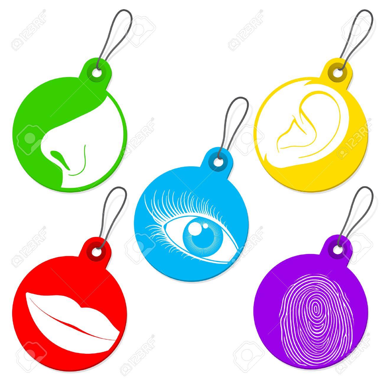 Five Senses Tag Set Royalty Free Cliparts, Vectors, And Stock ...