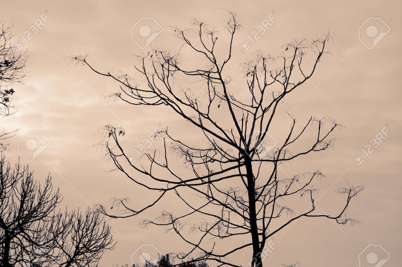 Leafless trees against a cloudy winter sky. Stock Photo - 4223099