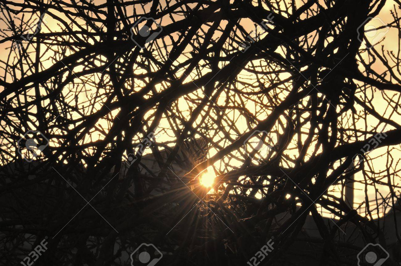 Sun light lens flare reflection over city rooftops and tree branches silhouette. Stock Photo - 9316352