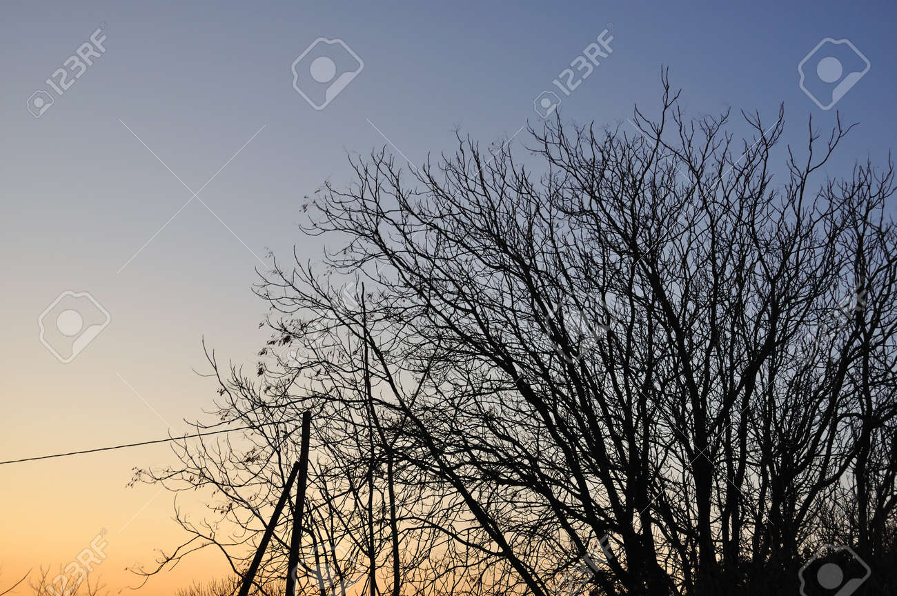 Tree branches silhouette under sunset colored sky  Nature background Stock Photo - 13547474
