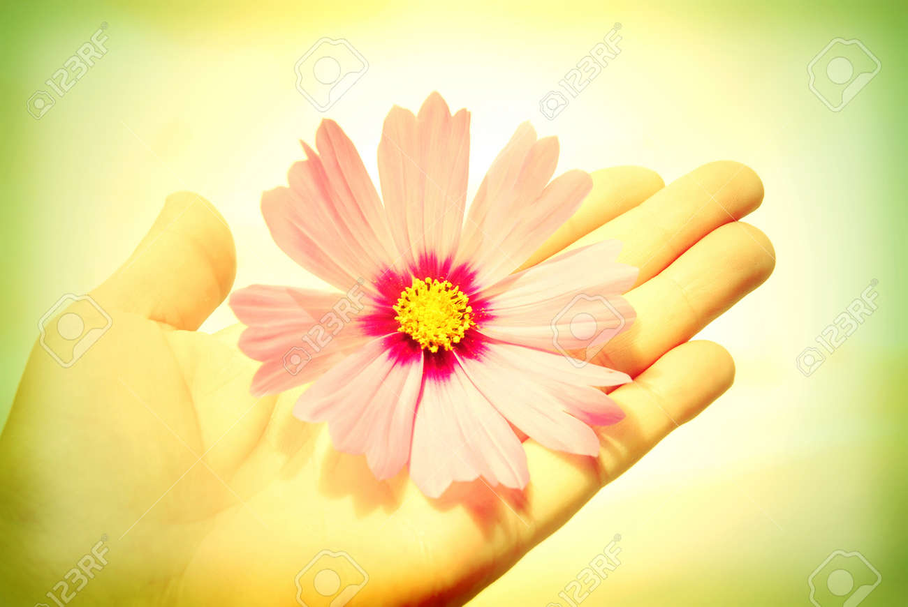 I offer my friendship, hand extended with a flower Stock Photo - 17108523