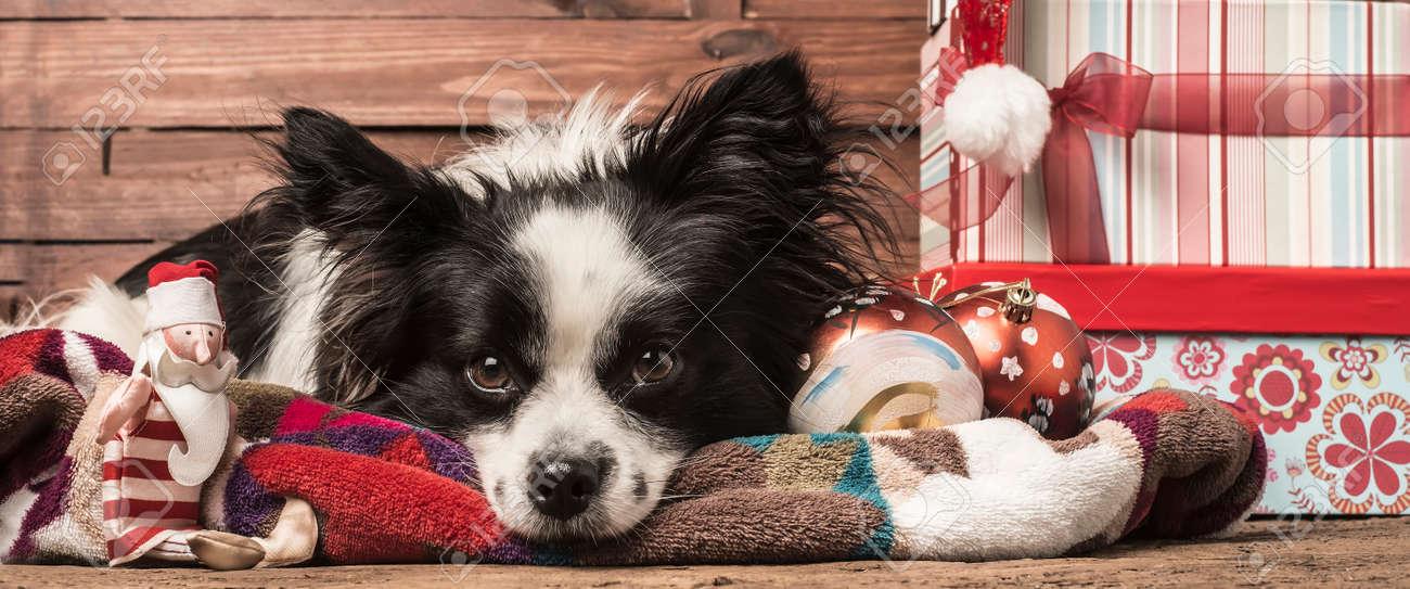 Weihnachten Hintergründe, Hund, Santa Spielzeug Und Geschenke-l ...
