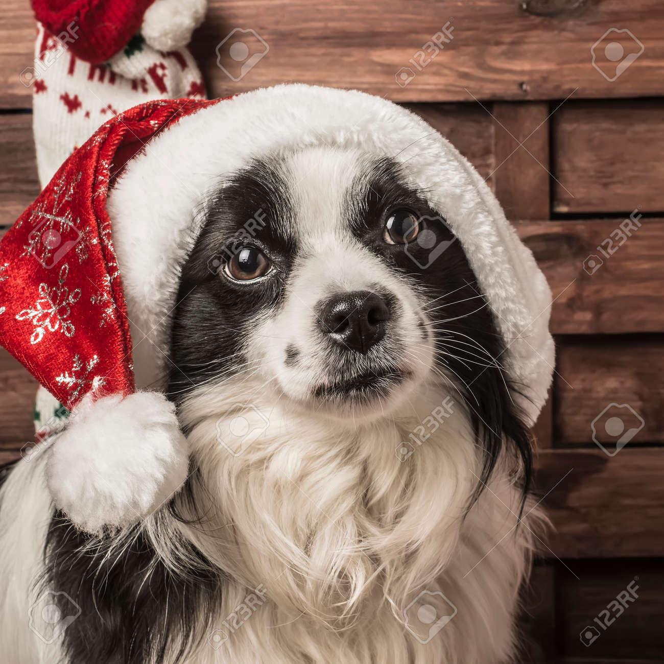 Weihnachtshund, Porträt Von Hund Mit Sankt-Hut Lizenzfreie Fotos ...