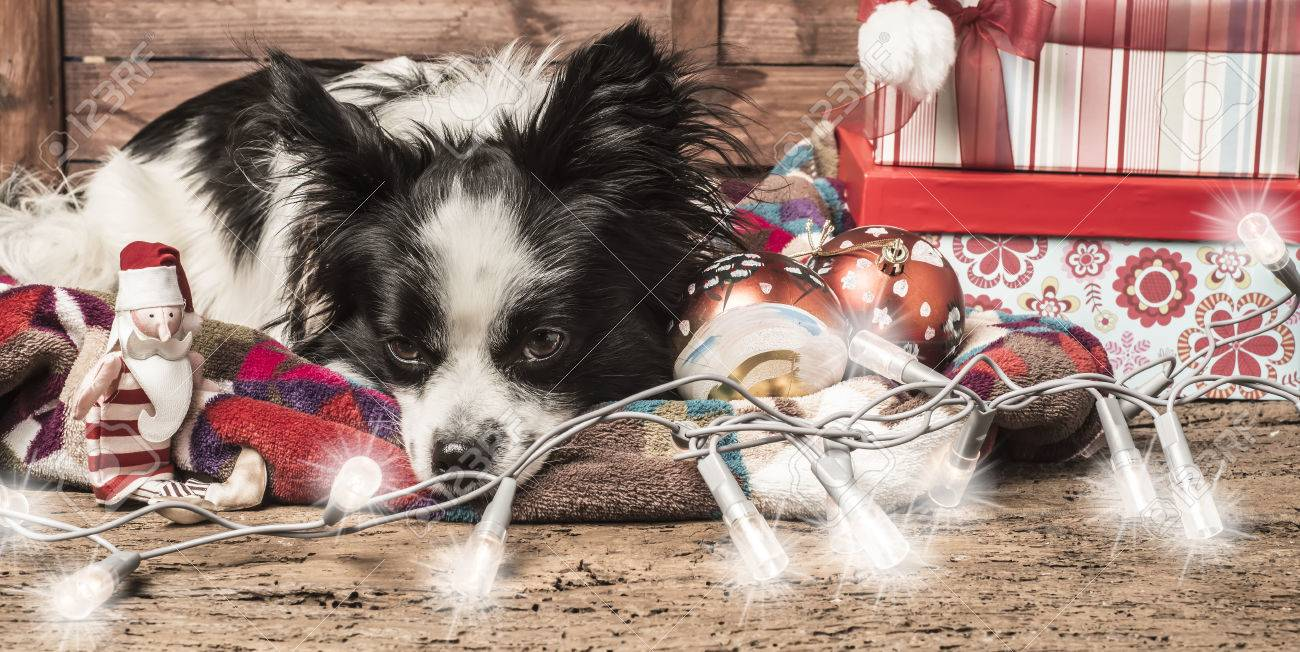Weihnachten Hintergründe, Langweilig Hund, Santa Spielzeug, Lichter ...
