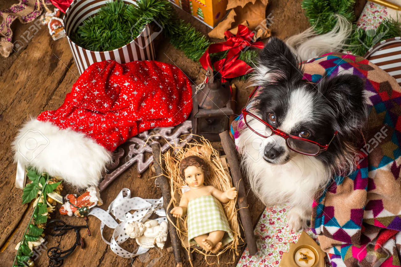 Dogs Christmas Cards, Funny Dog Wearing Glasses With The Child ...