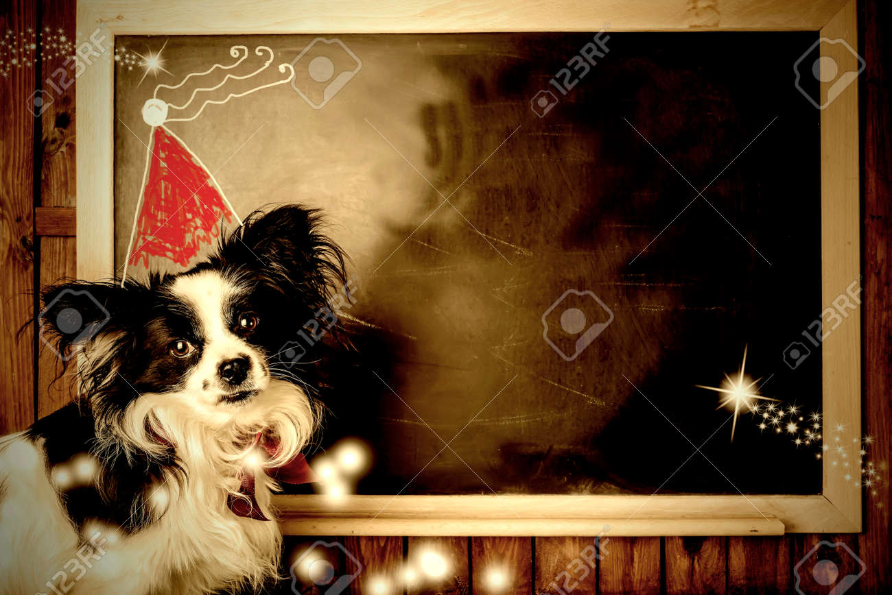 Funny Dog Christmas Greeting Cards Little Dog And Santa Hat Stock