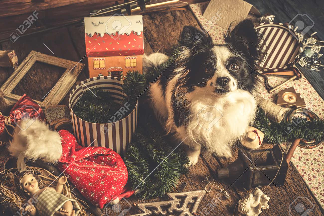 Dog Christmas Cards.Dog Christmas Cards Naughty Puppy Playing With The Christmas