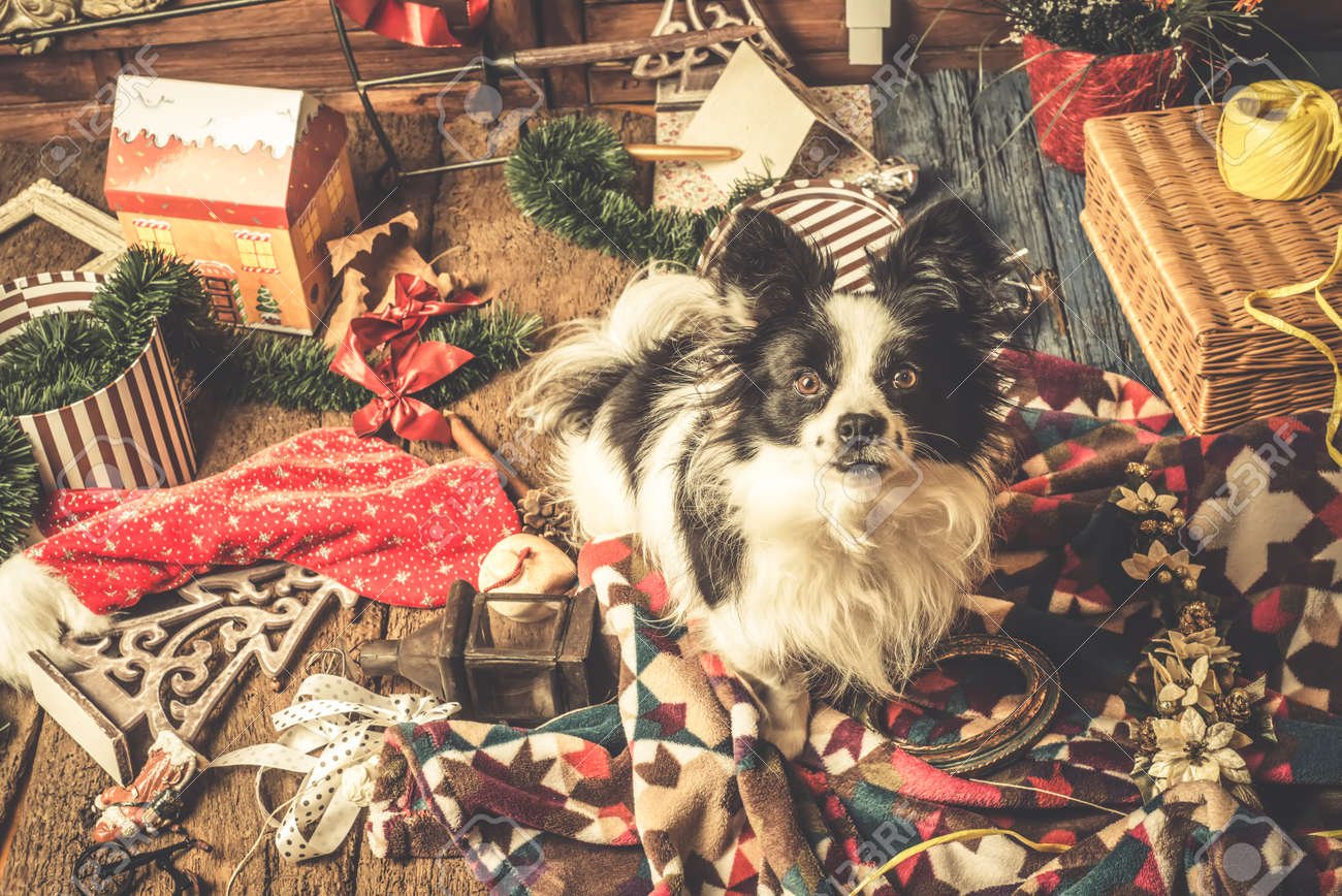 Dog Christmas Cards, Naughty Puppy Playing With The Christmas ...