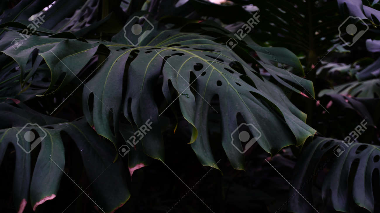 Close Up Photography Green Plants With Large Leaves Grow In