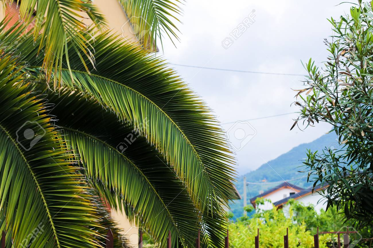 palm tree and mountain in background concept of exotic nature