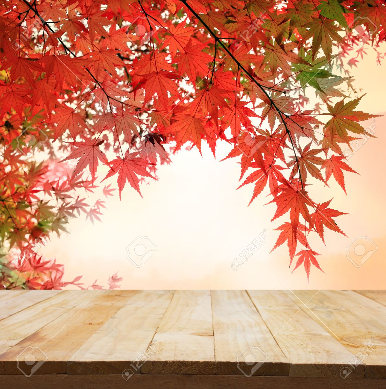 pastel fole of Japanese maple tree leaves colorful background in autumn and wood floor. Beauty natural background - 48292535