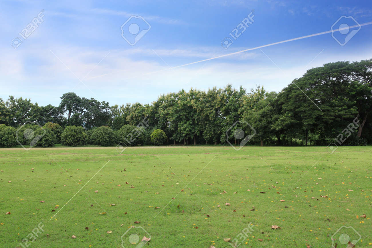 landscape of grass field and green environment public park use as natural background,backdrop - 64122145