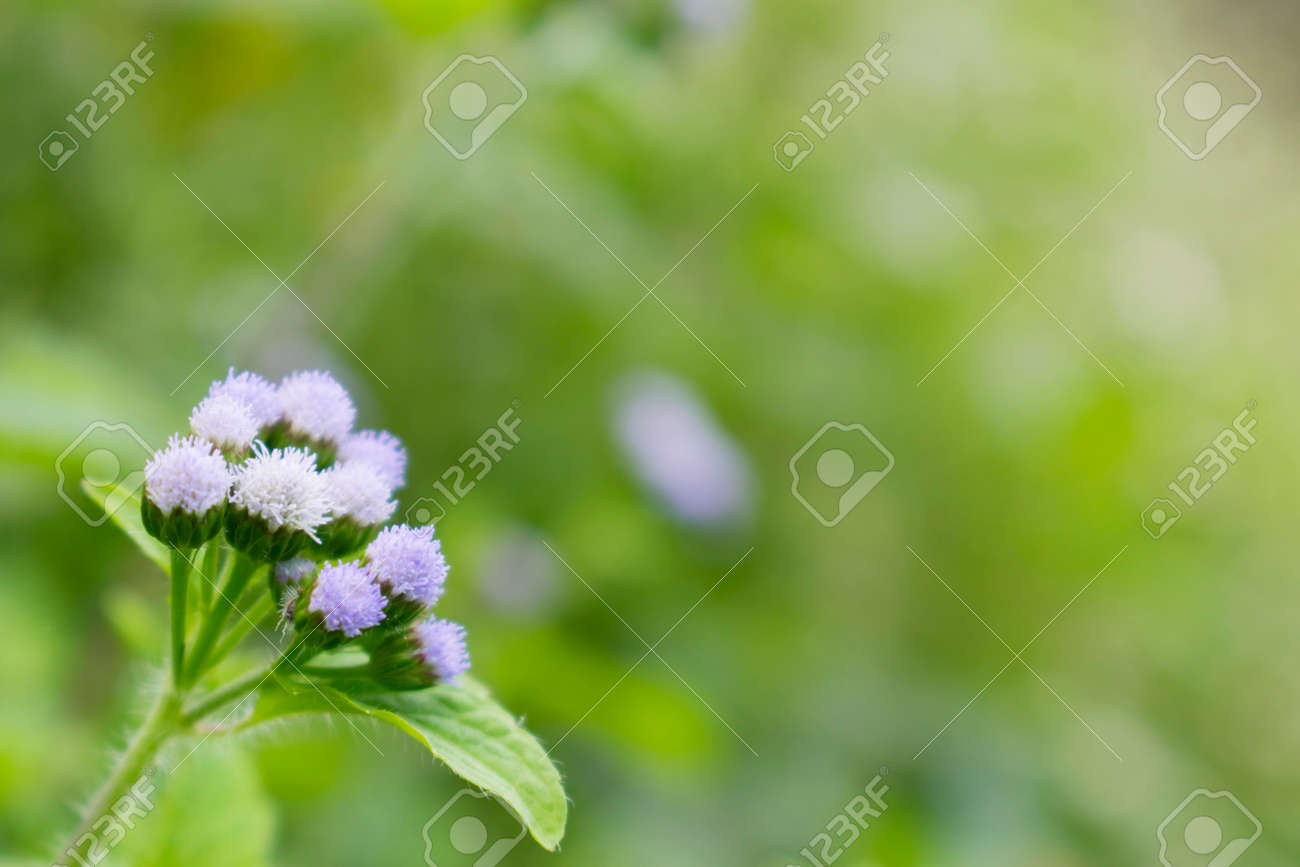 Small White Flower Bouquet Stock Photo, Picture And Royalty Free ...