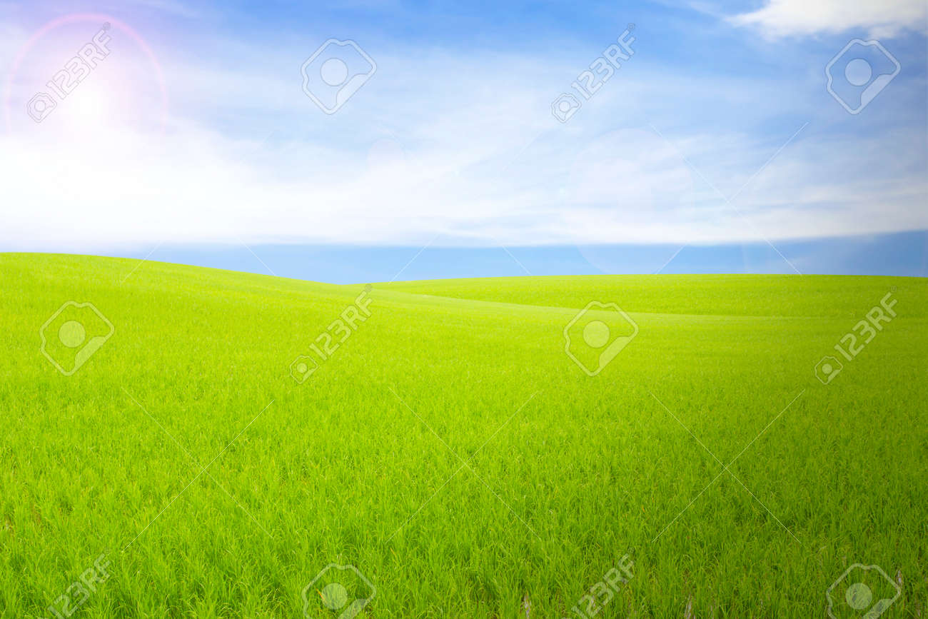 grass and sky backgrounds. Unique And Rice Field Green Grass Blue Sky Cloud Cloudy Landscape Background Stock  Photo  32766130 Throughout Grass And Sky Backgrounds