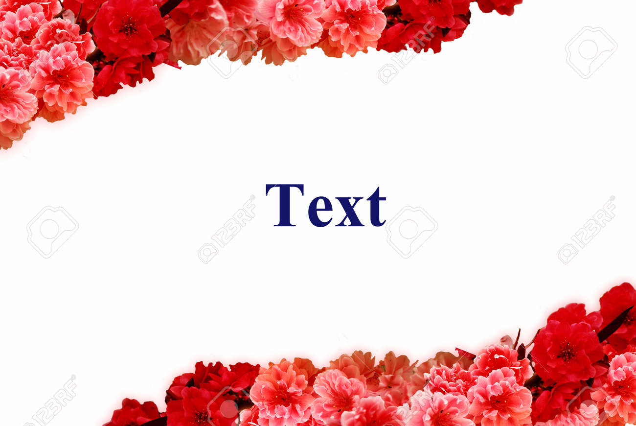 Red and pink flowers frame stock photo picture and royalty free red and pink flowers frame mightylinksfo