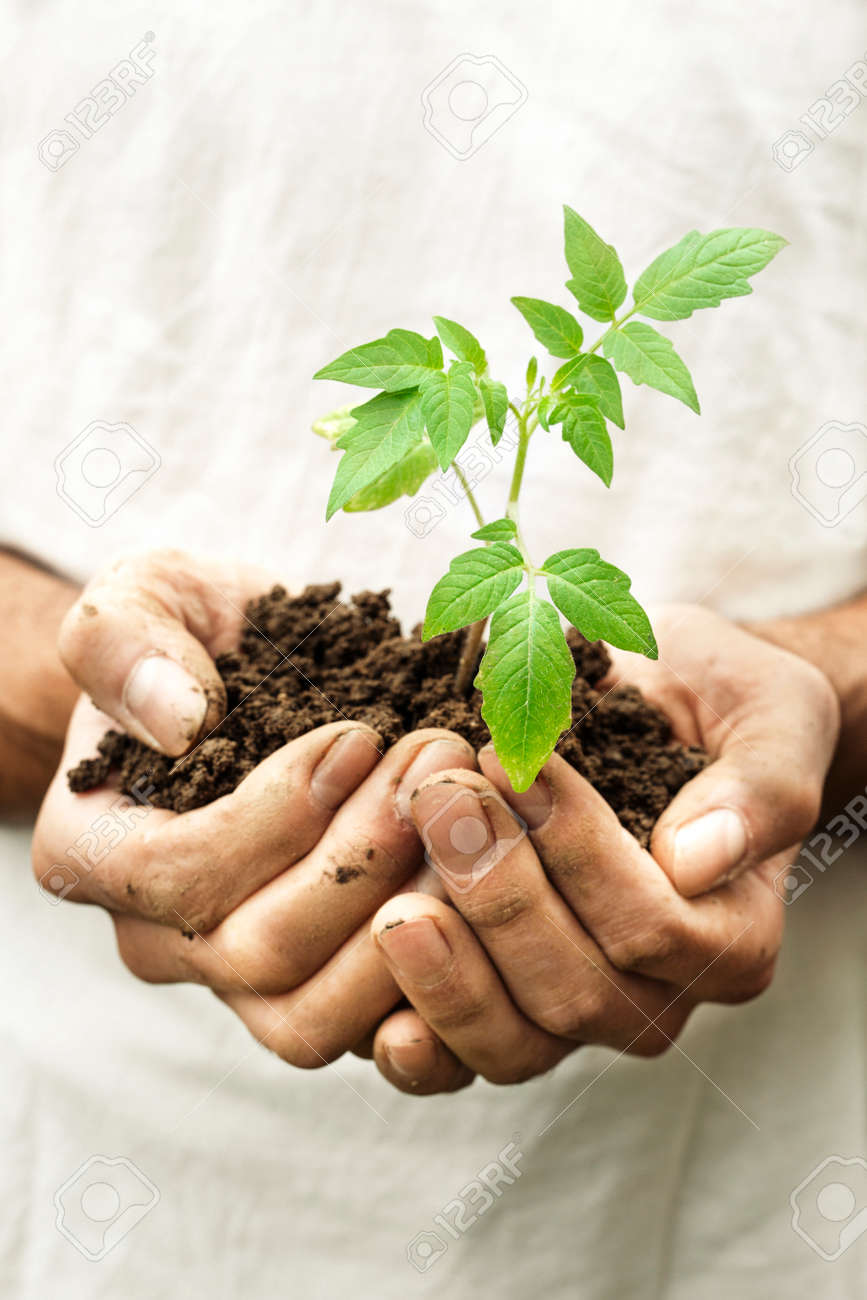 A Man Hands Holding A Fragile Green Young Plant With Care Symbol