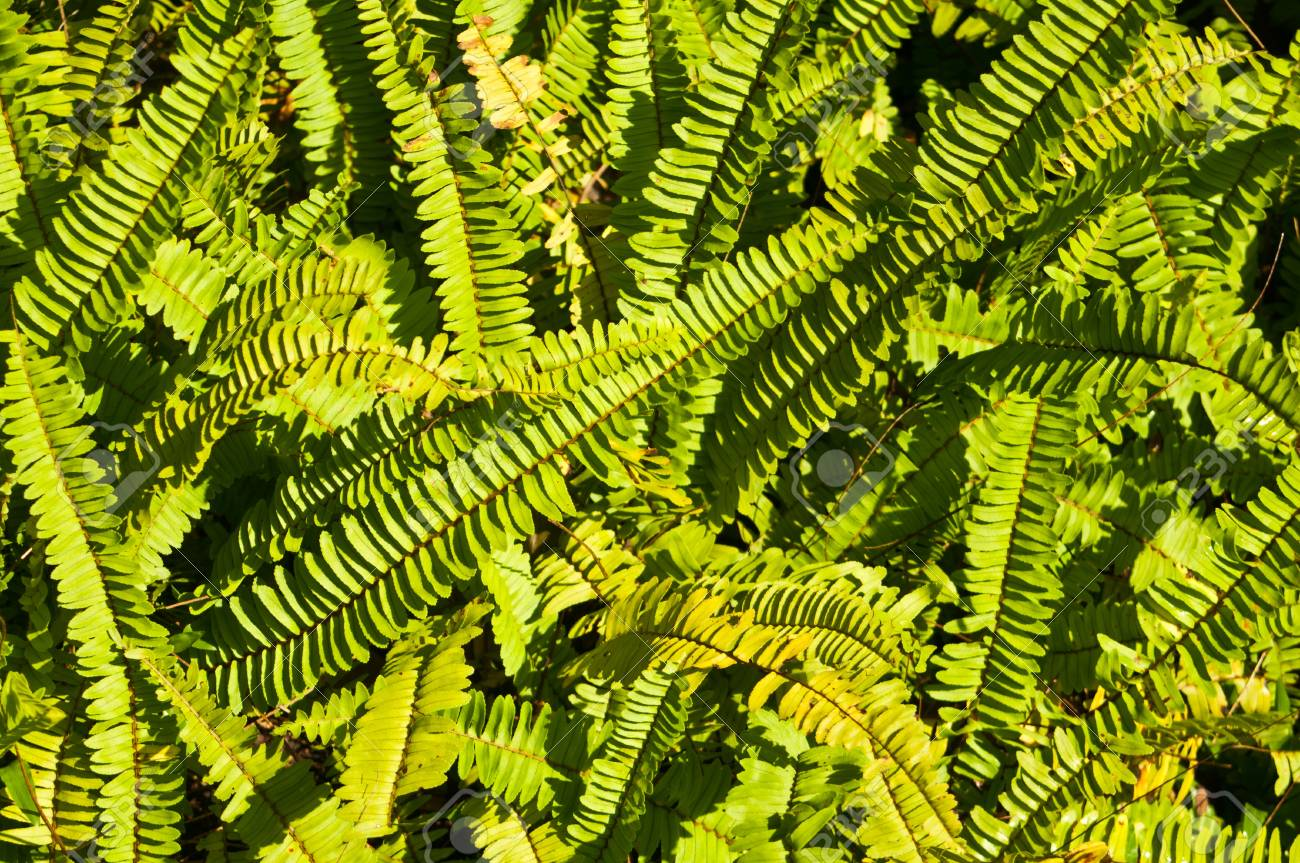 Group of ferns Stock Photo - 16953870