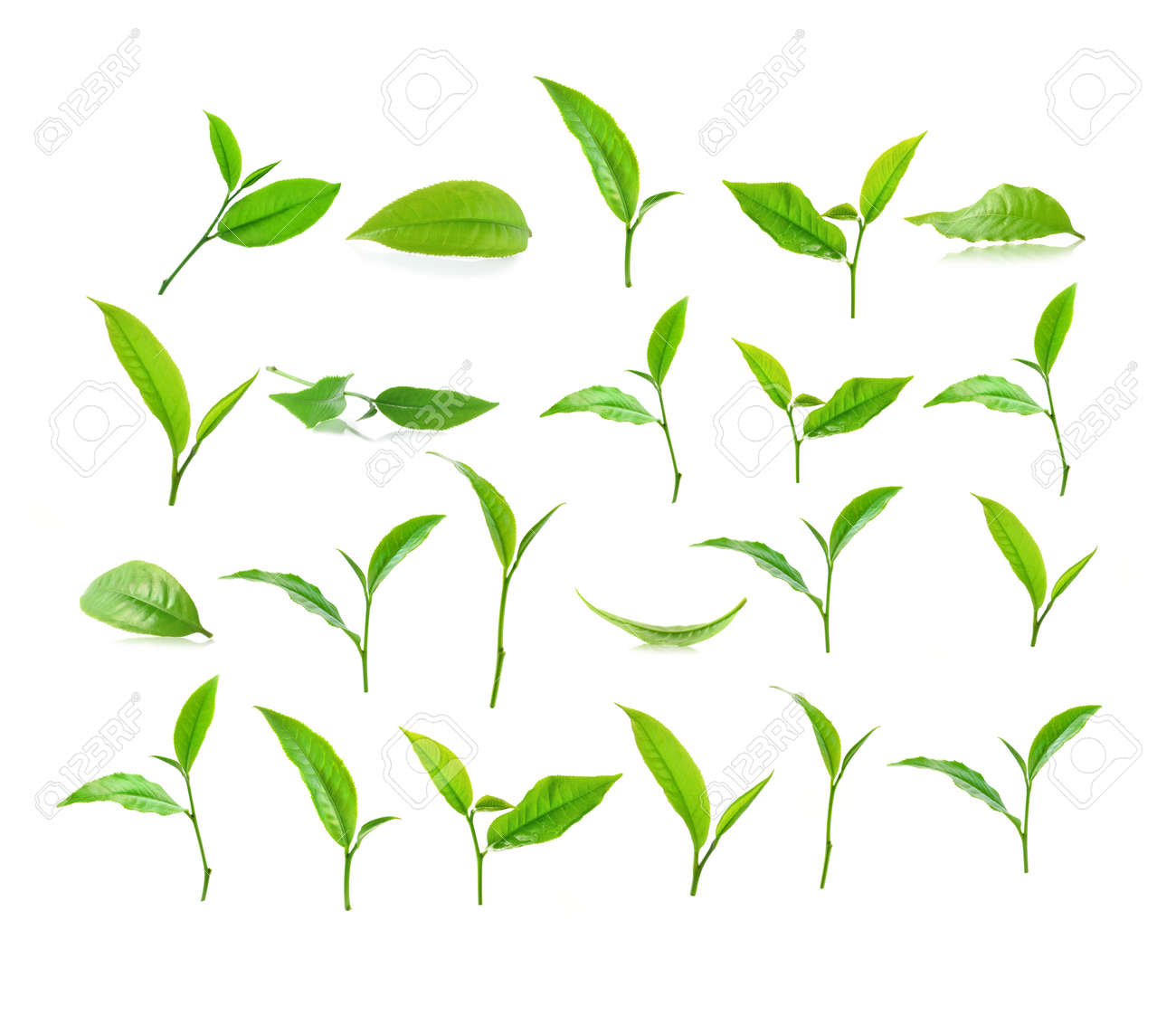 Green tea leaf isolated on white background stock photo picture green tea leaf isolated on white background stock photo 38922055 thecheapjerseys Image collections