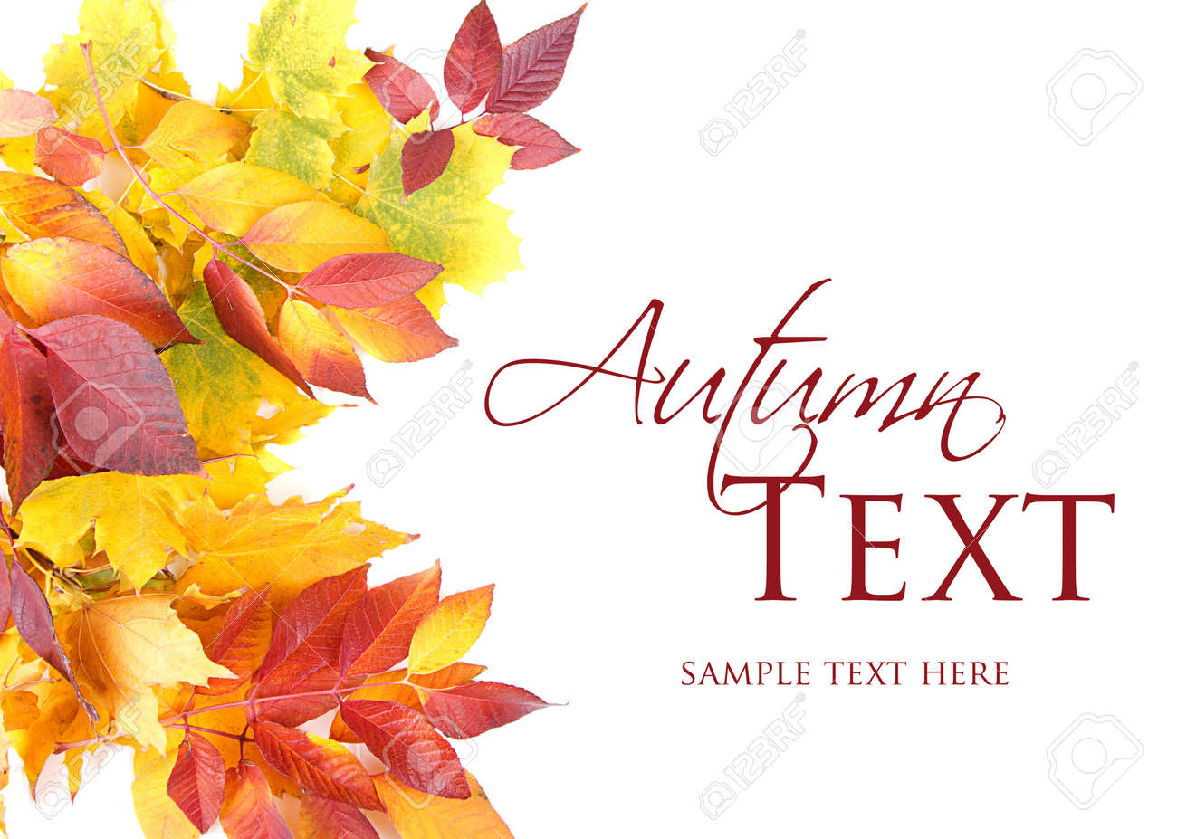 Autumn leaves red, green and yellow on white background Stock Photo - 16758192
