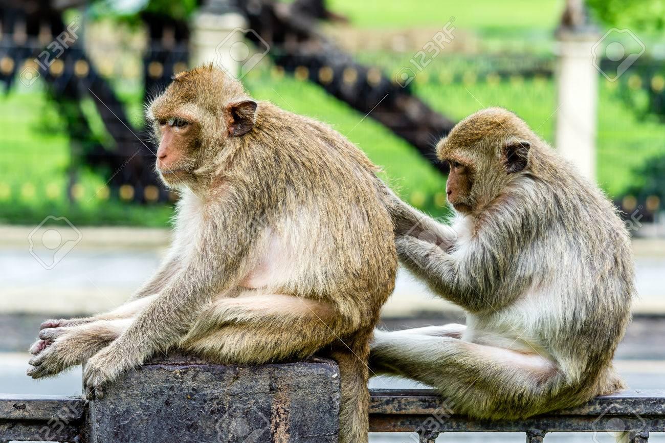 Resultado de imagen de as habilidades del mono