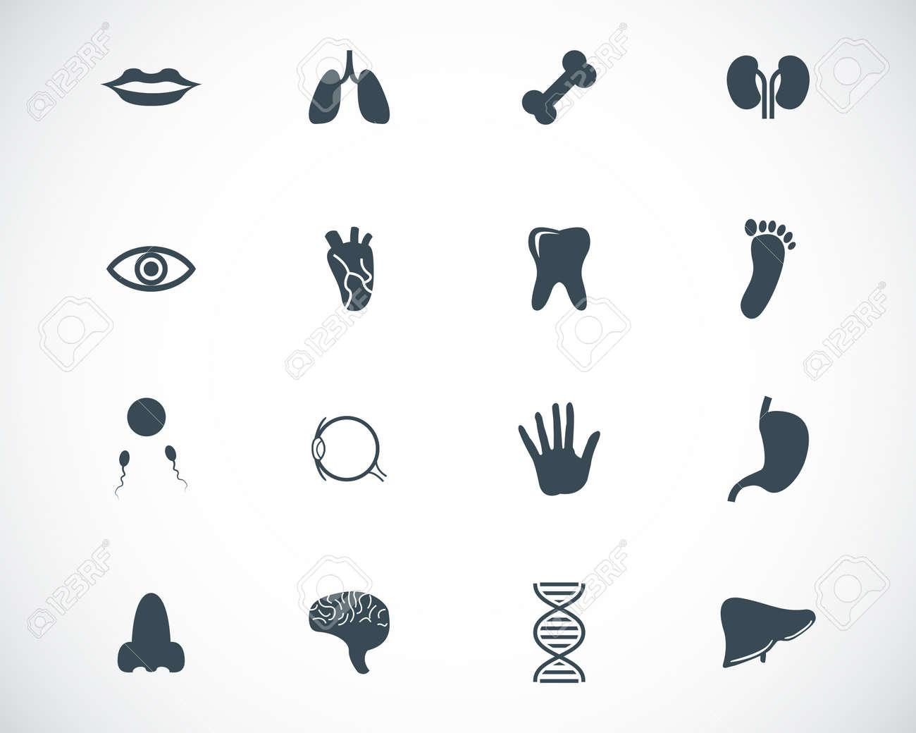 Vector black  anatomy  icons set Stock Vector - 23087441
